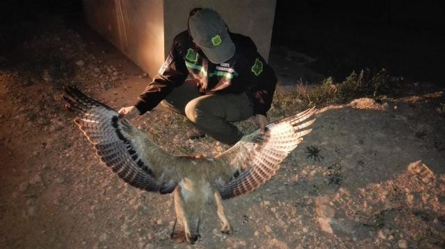 El Ayuntamiento solicita la colaboración ciudadana para detectar animales o aves heridas, Foto 1