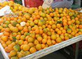 La Guardia Civil detiene a tres personas por la sustracción de una tonelada y media de mandarinas