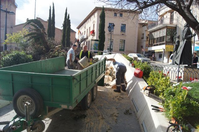 Struck by large ficus in a bed of Balsa Vieja Square for the effect of the wind storm without any damage, Foto 7
