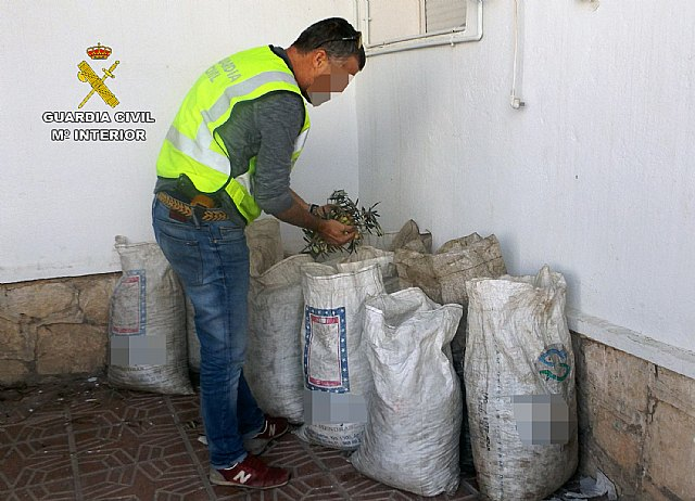 The Civil Guard recovers more than three hundred kilos of olives stolen in a holding Lébor, Foto 1