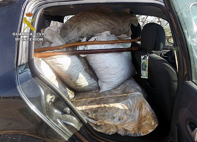 The Civil Guard recovers more than three hundred kilos of olives stolen in a holding Lébor, Foto 2