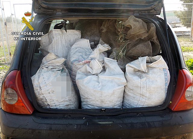 The Civil Guard recovers more than three hundred kilos of olives stolen in a holding Lébor, Foto 3