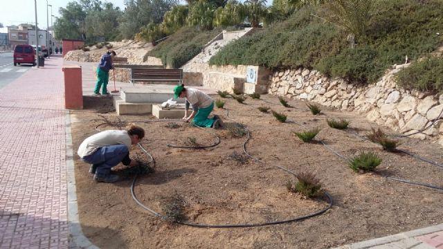 Trabajos de mantenimiento y mejora en el jardín de El Palmeral, Foto 3