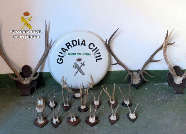 La Guardia Civil sorprende a un ciudadano suizo con 17 trofeos de caza mayor en el coche - 2, Foto 2
