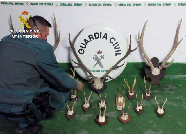 La Guardia Civil sorprende a un ciudadano suizo con 17 trofeos de caza mayor en el coche - 4, Foto 4