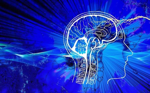 Creados algoritmos para entender la relación de las conexiones cerebrales con los movimientos - 1, Foto 1