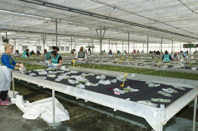 Sector de la flor cortada y planta ornamental - 2, Foto 2