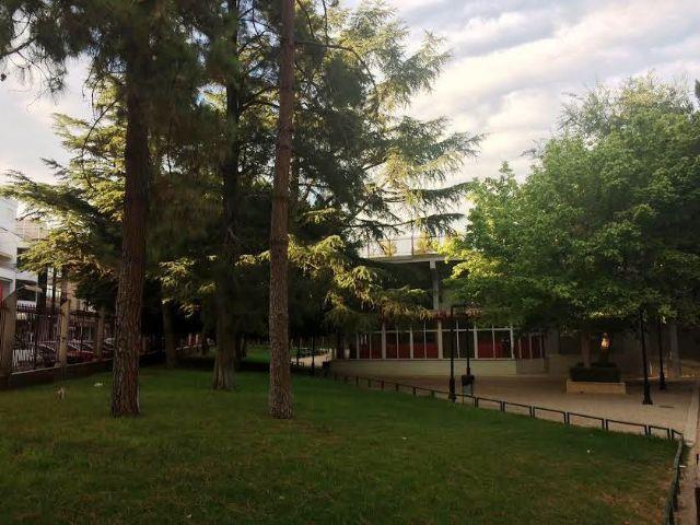 Realizarán trabajos de mantenimiento del arbolado de grandes dimensiones ubicado en el parque municipal Marcos Ortiz durante este lunes y martes, Foto 2