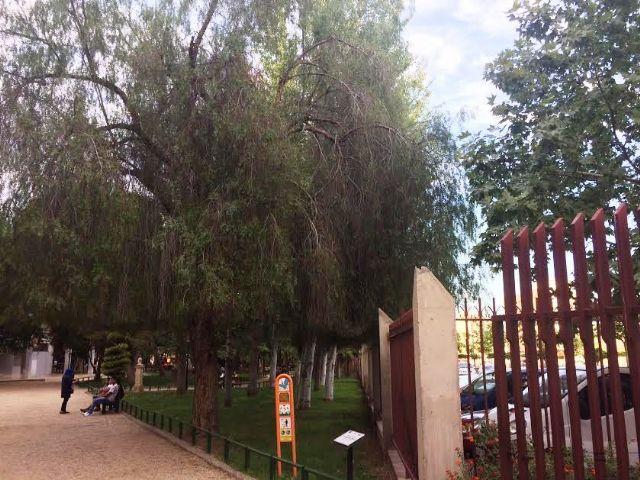 Realizarán trabajos de mantenimiento del arbolado de grandes dimensiones ubicado en el parque municipal Marcos Ortiz durante este lunes y martes, Foto 5