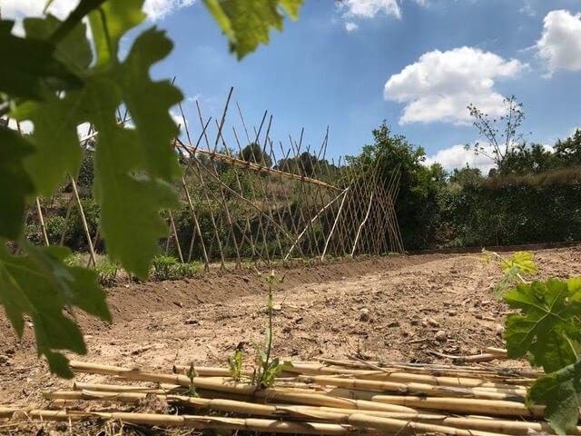 Ayuntamiento y Agroeconatura 2020 colaboran para la formación sobre recursos naturales y agricultura sostenible, Foto 1
