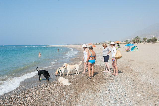 La playa de las Moreras se convierte en la primera playa canina de España en conseguir la bandera Q de Calidad Turística, Foto 1