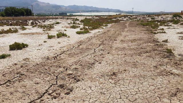 Denuncian la destrucción de flora protegida en los Saladares del Guadalentín, Foto 2