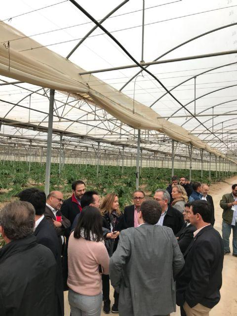 Grupo Durán muestra la tecnología y técnicas que le han convertido en el primer productor de papaya de Europa, Foto 1