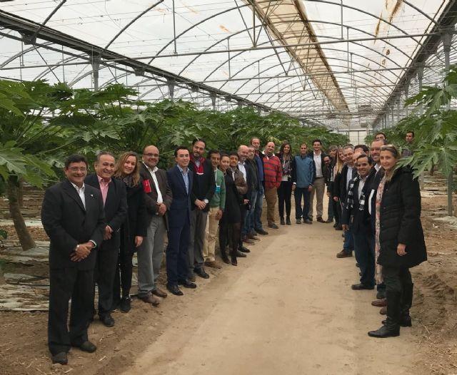 Grupo Durán muestra la tecnología y técnicas que le han convertido en el primer productor de papaya de Europa, Foto 2