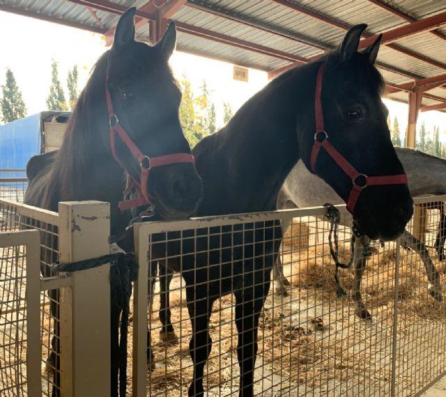 Inaugurada la Feria de Ganado Equino de Puerto Lumbreras - 2, Foto 2