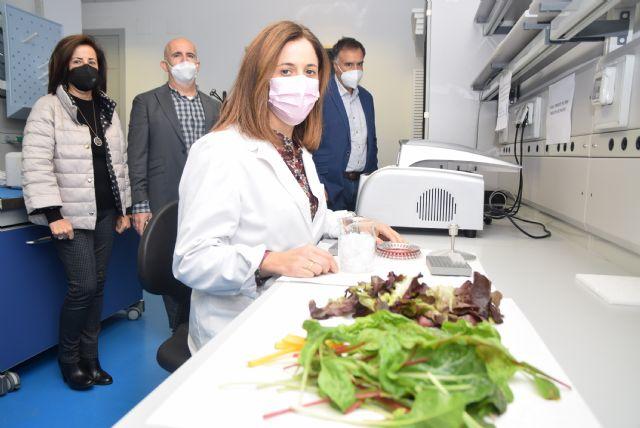 El uso de compost procedentes de residuos orgánicos protege y aumenta la calidad nutricional de lechugas y espinacas baby leaf - 1, Foto 1