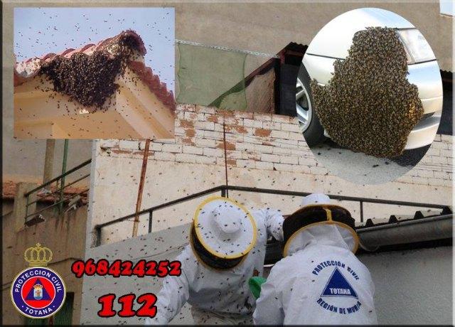 Protección Civil de Totana activa el dispositivo para recuperar enjambres perdidos en el entorno urbano, Foto 1
