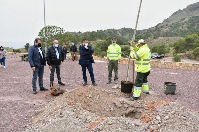 El alcalde de Lorca participa en la jornada de plantación de cerca de medio centenar de árboles en el Parque de La Salud de La Hoya - 1, Foto 1