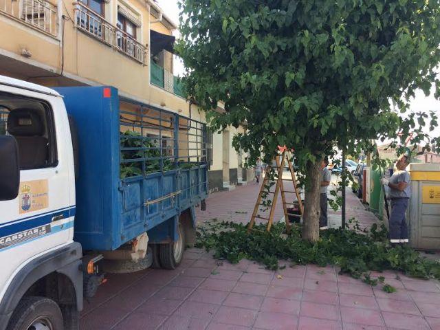 Comienzan los trabajos de poda de las moreras en parques y jardines y las vías públicas de Totana, Foto 1