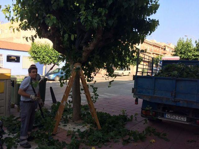 Comienzan los trabajos de poda de las moreras en parques y jardines y las vías públicas de Totana, Foto 4