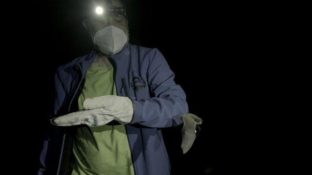 ANSE determina la importancia del embalse del Argos para un murciélago en peligro de extinción - 2, Foto 2
