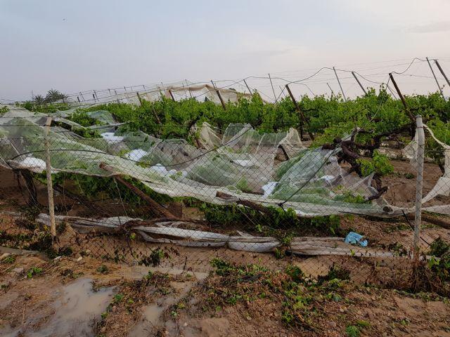 La Consejería rechaza la petición de ayudas a los agricultores alhameños afectados por las lluvias y el granizo, Foto 1