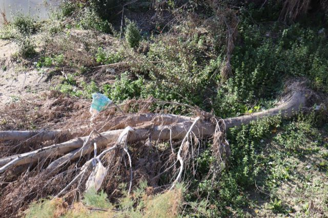 Huermur denuncia la inacción de la CHS ante los miles de plásticos y envases que se acumulan en el Río Segura, Foto 4