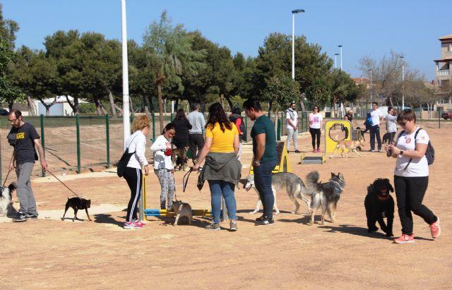 San Pedro del Pinatar cuenta con un parque agility canino con más de una decena de obstáculos - 3, Foto 3