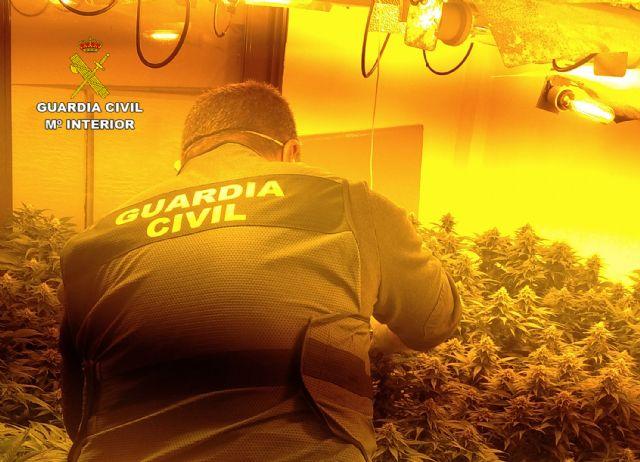 La Guardia Civil desmantela cuatro invernaderos clandestinos de marihuana en Los Alcázares - 1, Foto 1