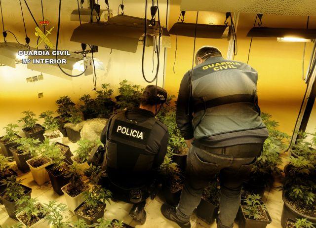 La Guardia Civil desmantela cuatro invernaderos clandestinos de marihuana en Los Alcázares - 2, Foto 2