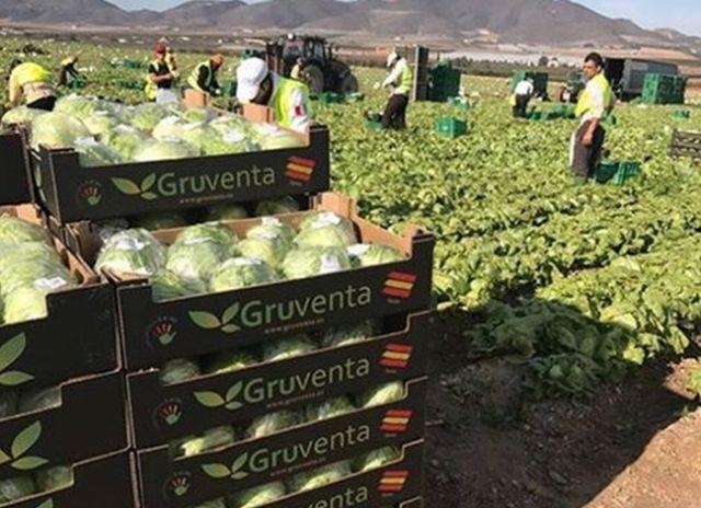 Gruventa vislumbra un óptimo nivel de crecimiento del sector hortofrutícola español en Asia y Emiratos Árabes - 1, Foto 1