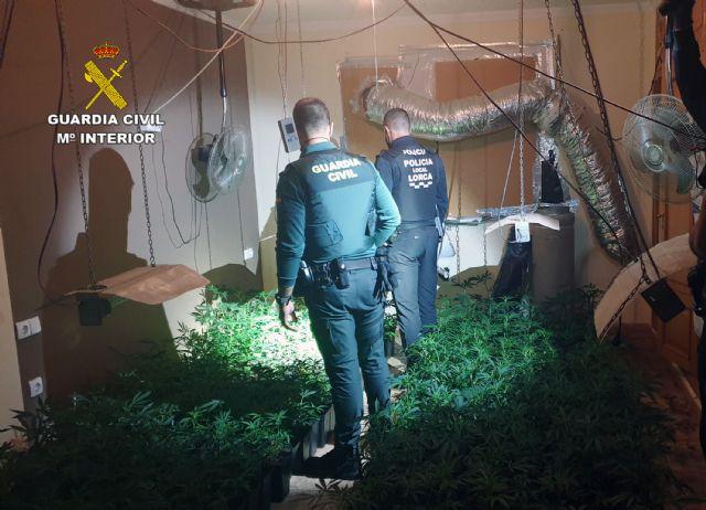 Desmantelan un  invernadero de marihuana en Puerto Lumbreras - 2, Foto 2