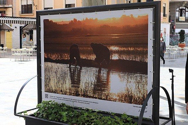 Inaugurada la exposición Entre arrozales del fotógrafo Pedro Navarro Laforet en el paseo Alfonso X el Sabio de Murcia - 3, Foto 3