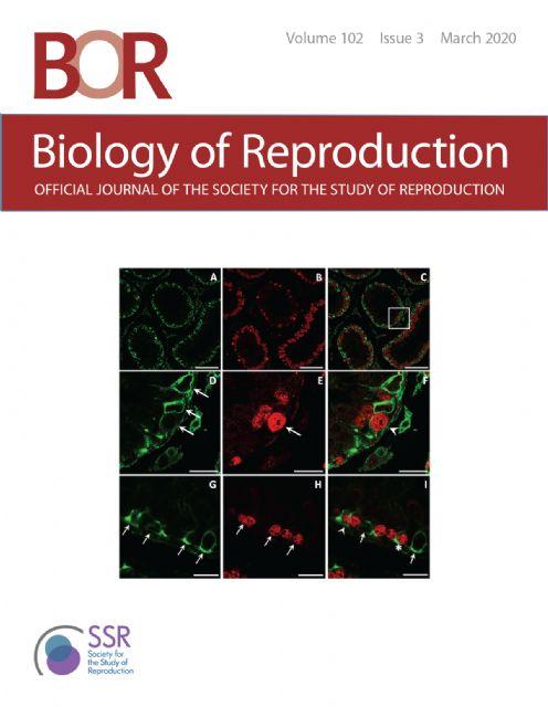 Investigadores de la UMU descubren que las células de Sertoli, de gran importancia en la reproducción, son capaces de renovarse - 1, Foto 1