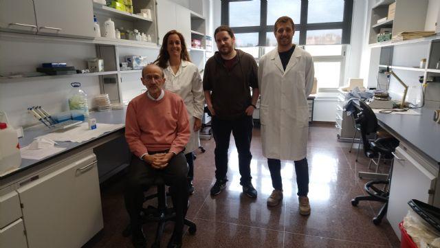 Investigadores de la UMU descubren que las células de Sertoli, de gran importancia en la reproducción, son capaces de renovarse - 2, Foto 2