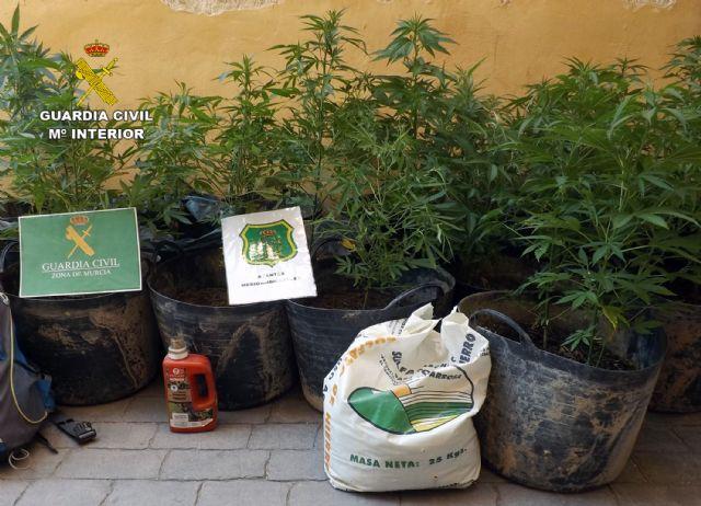 Desmantelada una plantación de marihuana en un paraje forestal de Caravaca de la Cruz - 1, Foto 1
