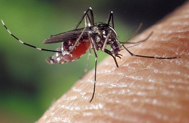 Salud recomienda evitar acúmulos de agua para impedir focos de cría del mosquito tigre - 1, Foto 1