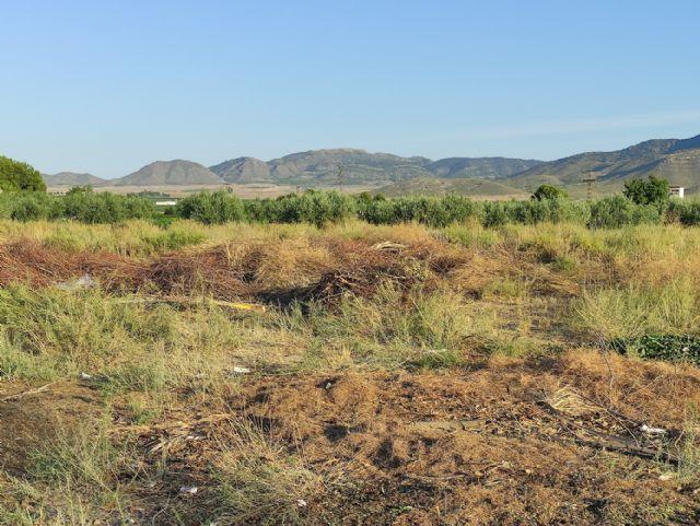 IU VERDES pide explicaciones al concejal de Jardines por la gestión del contrato de limpieza y mantenimiento de jardines - 3, Foto 3
