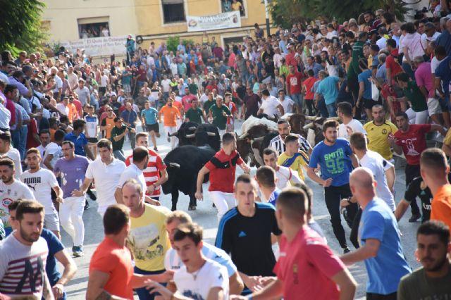 Primer encierro taurino de las fiestas de Calasparra rápido y concurrido - 5, Foto 5