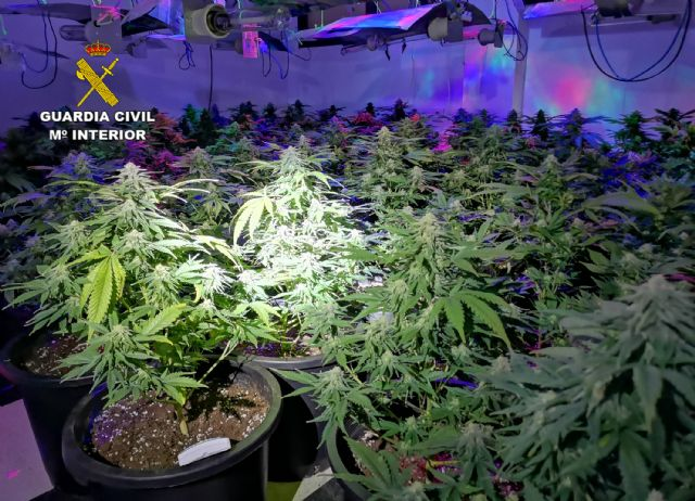 La Guardia Civil desmantela una plantación de marihuana en un domicilio de Cieza - 3, Foto 3