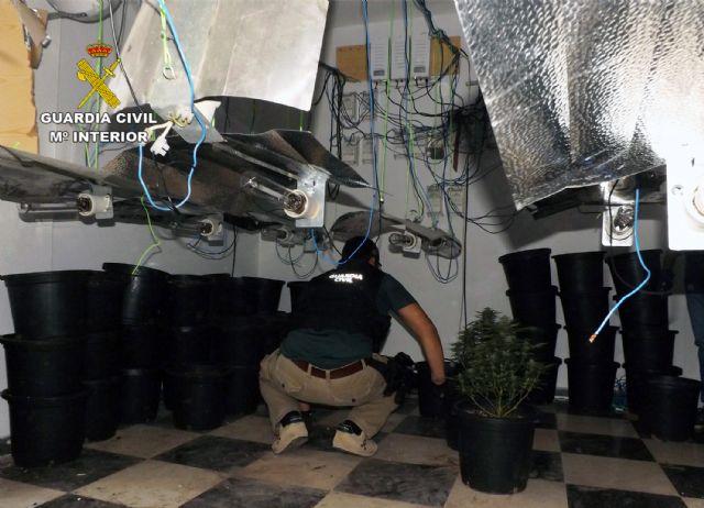 La Guardia Civil desmantela una plantación de marihuana en un domicilio de Cieza - 4, Foto 4