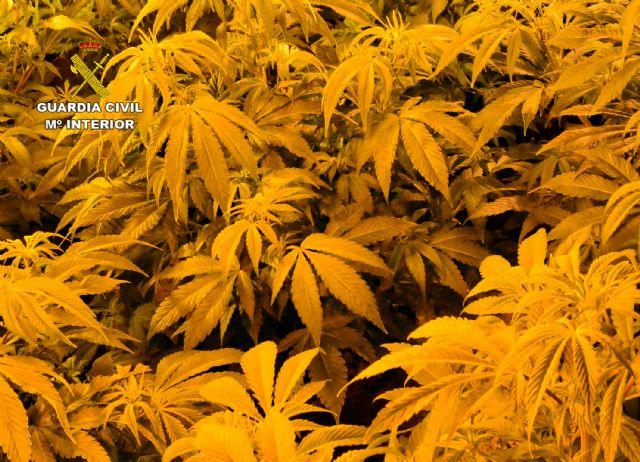Una incidencia destapa una plantación indoor de marihuana en Las Torres de Cotillas - 1, Foto 1