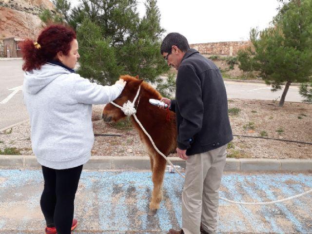 Un pony abandonado en las inmediaciones de Los Pilones encuentra un hogar - 1, Foto 1