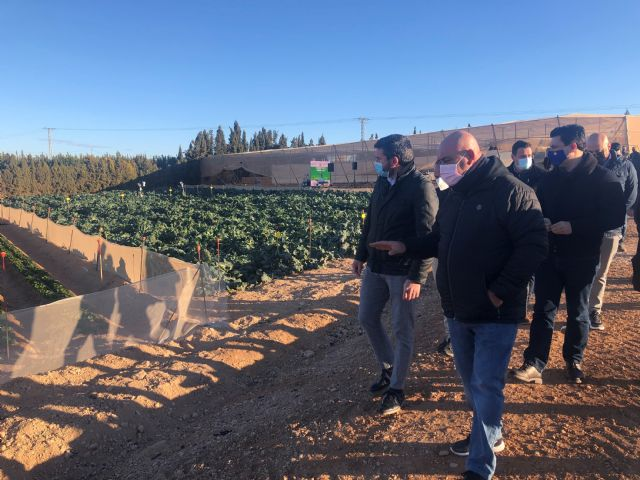 La agricultura del Campo de Cartagena sigue invirtiendo en tecnología para garantizar el uso óptimo de agua - 1, Foto 1