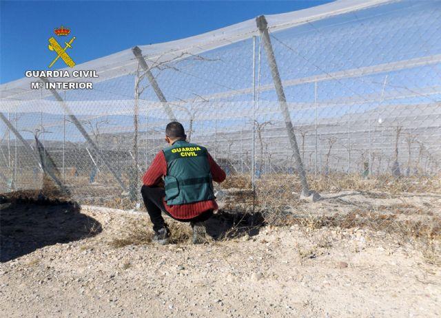 La Guardia Civil desmantela un grupo delictivo dedicado a la sustracción de uva en la comarca del Bajo Guadalentín, Foto 1