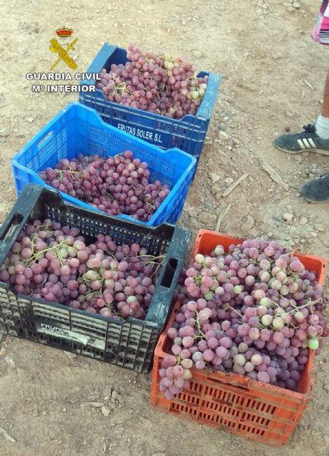 La Guardia Civil desmantela un grupo delictivo dedicado a la sustracción de uva en la comarca del Bajo Guadalentín, Foto 4