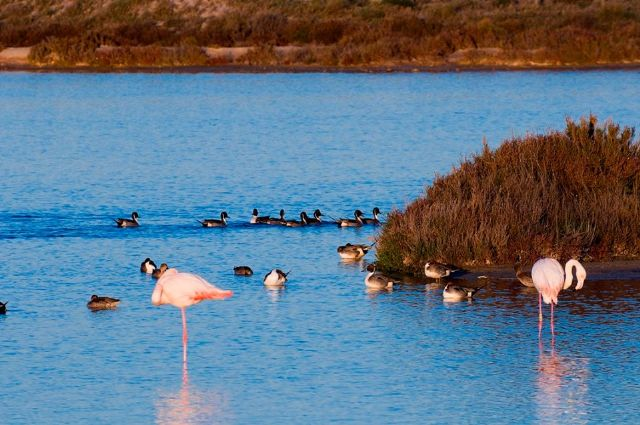 Medio Ambiente organiza actividades en las Salinas de San Pedro con motivo del Día Mundial de las aves migratorias - 1, Foto 1