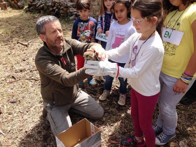 Liberan un mochuelo europeo y un cernícalo común en los parques regionales de Sierra Espuña y El Valle, Foto 2