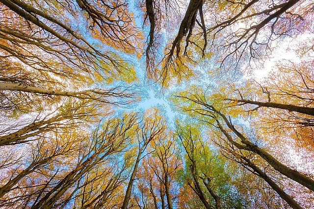 Los principales incentivos fiscales para cuidar el medio ambiente - 1, Foto 1
