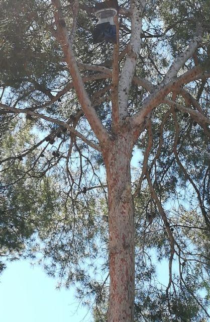 Control biológico de la procesionaria del pino - 3, Foto 3